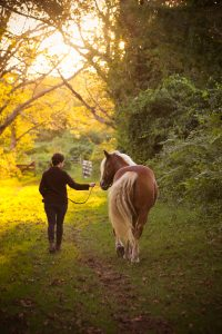 Being with my horse is another way to lessen anxiety.