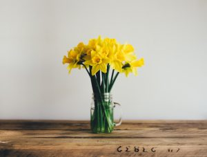 A vase of spring daffodils